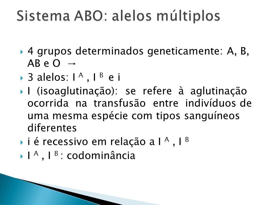 4 grupos determinados geneticamente: A, B, AB e O 3 alelos: I A, I B e i I (isoaglutinação): se refere à aglutinação ocorrida na transfusão entre indi