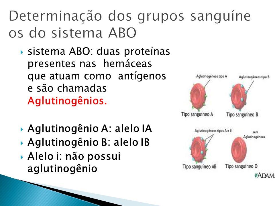 sistema ABO: duas proteínas presentes nas hemáceas que atuam como antígenos e são chamadas Aglutinogênios. Aglutinogênio A: alelo IA Aglutinogênio B: