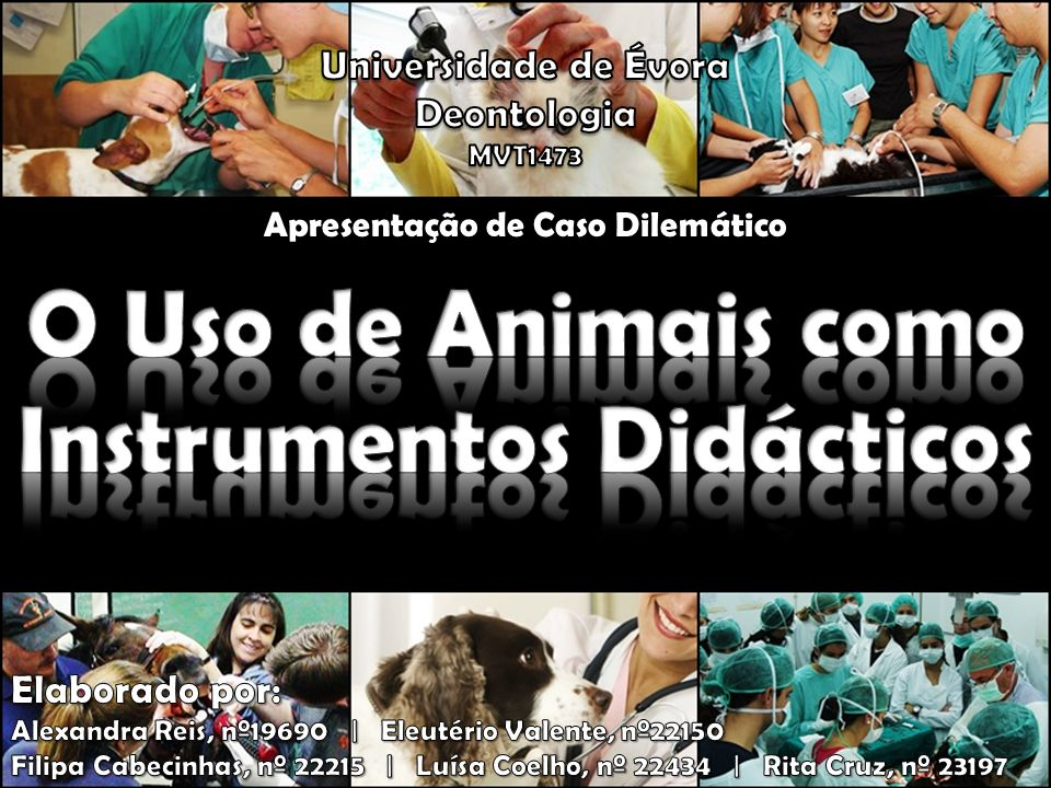 A utilização de animais em Medicina Veterinária (ex.: ensino de técnicas operatórias) é comum na maioria das Universidades e é tida como uma prática aceitável pela maioria dos professores.