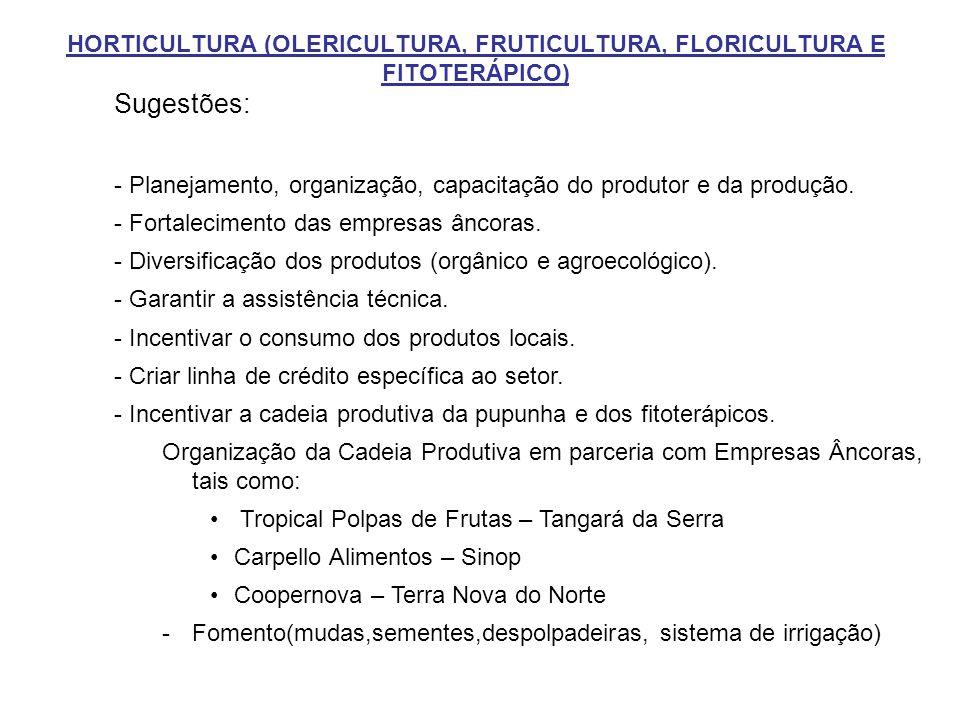 HORTICULTURA (OLERICULTURA, FRUTICULTURA, FLORICULTURA E FITOTERÁPICO) Sugestões: - Planejamento, organização, capacitação do produtor e da produção.