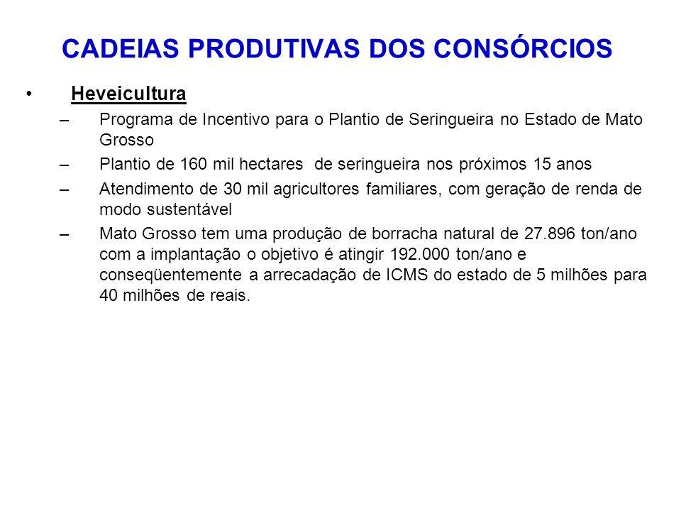 CADEIAS PRODUTIVAS DOS CONSÓRCIOS Heveicultura –Programa de Incentivo para o Plantio de Seringueira no Estado de Mato Grosso –Plantio de 160 mil hectares de seringueira nos próximos 15 anos –Atendimento de 30 mil agricultores familiares, com geração de renda de modo sustentável –Mato Grosso tem uma produção de borracha natural de 27.896 ton/ano com a implantação o objetivo é atingir 192.000 ton/ano e conseqüentemente a arrecadação de ICMS do estado de 5 milhões para 40 milhões de reais.