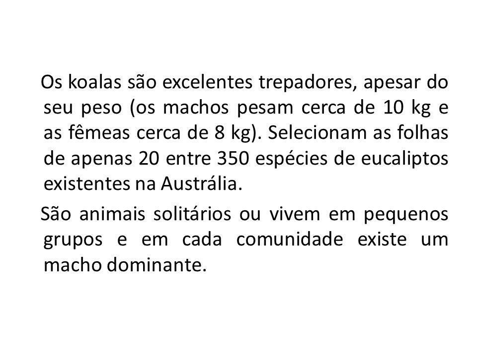 Os koalas são excelentes trepadores, apesar do seu peso (os machos pesam cerca de 10 kg e as fêmeas cerca de 8 kg). Selecionam as folhas de apenas 20