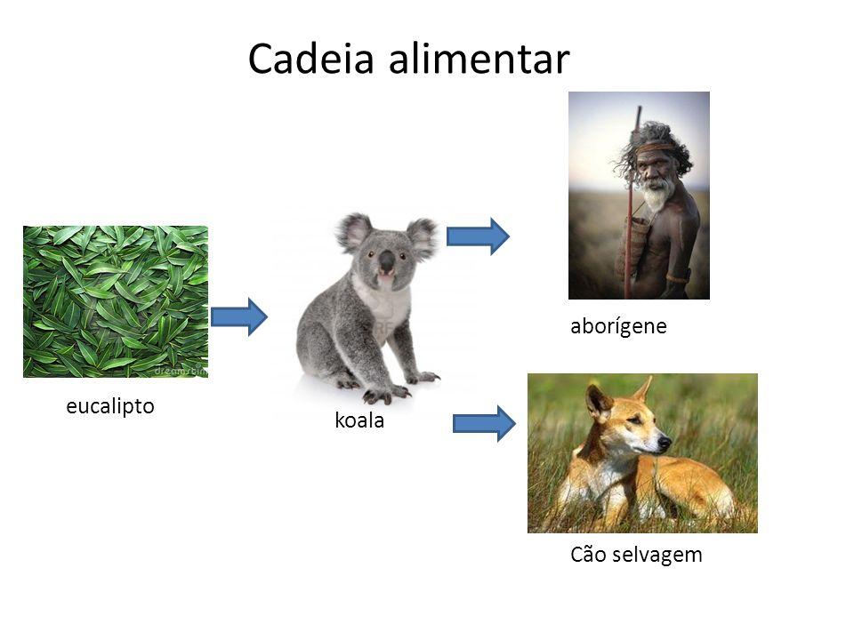 Cadeia alimentar eucalipto koala aborígene Cão selvagem