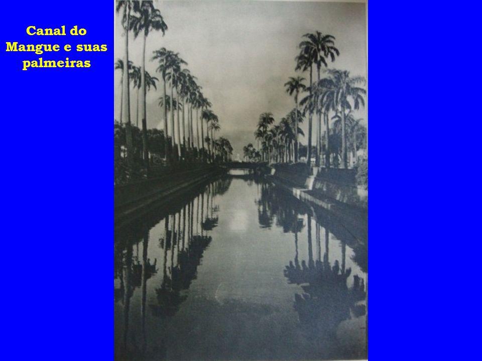 Canal do Mangue e suas palmeiras