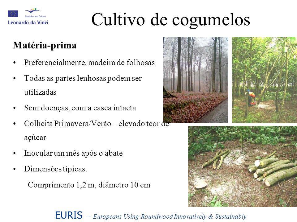 Cultivo de cogumelos Matéria-prima Preferencialmente, madeira de folhosas Todas as partes lenhosas podem ser utilizadas Sem doenças, com a casca intac