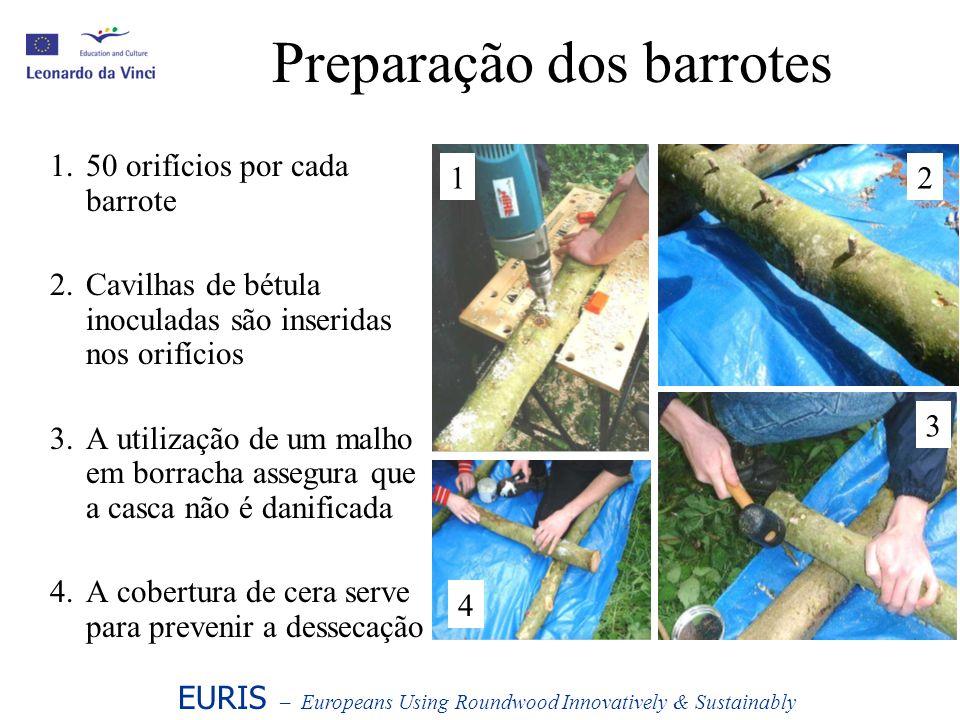 Preparação dos barrotes 1.50 orifícios por cada barrote 2.Cavilhas de bétula inoculadas são inseridas nos orifícios 3.A utilização de um malho em borr