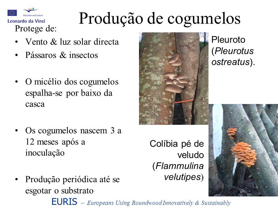 Produção de cogumelos Protege de: Vento & luz solar directa Pássaros & insectos O micélio dos cogumelos espalha-se por baixo da casca Os cogumelos nas
