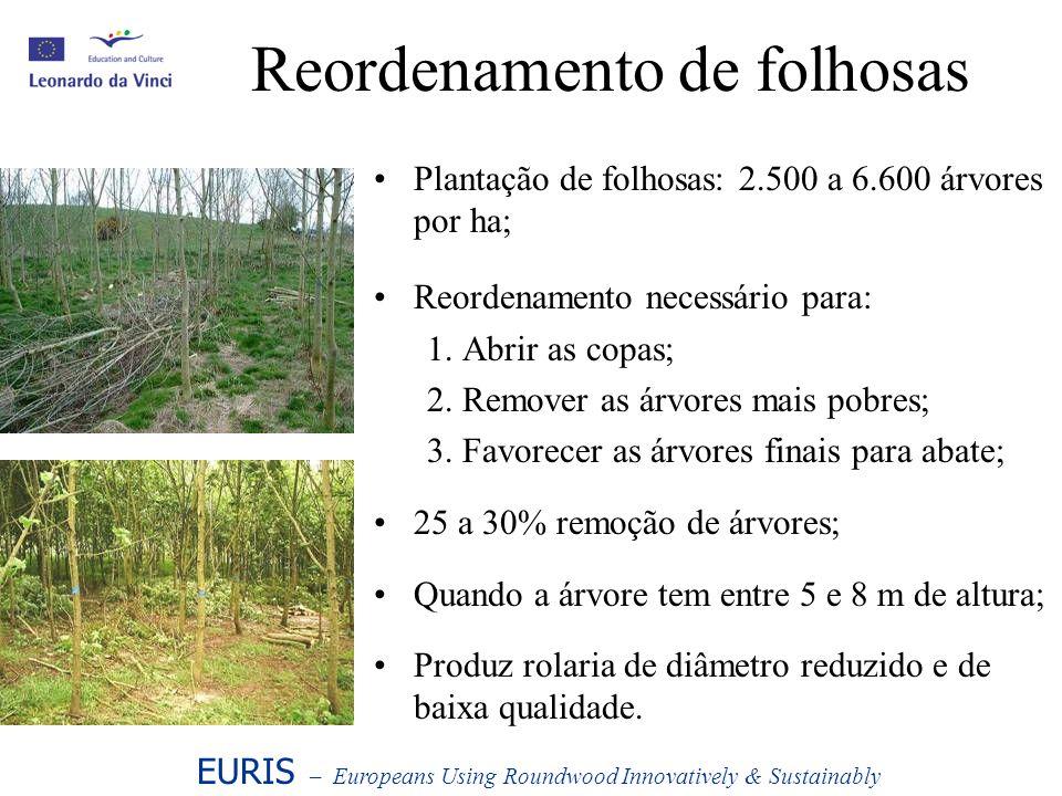 Reordenamento de folhosas Plantação de folhosas: 2.500 a 6.600 árvores por ha; Reordenamento necessário para: 1. Abrir as copas; 2. Remover as árvores