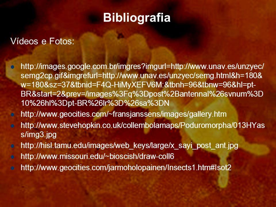 Bibliografia Vídeos e Fotos: http://images.google.com.br/imgres?imgurl=http://www.unav.es/unzyec/ semg2cp.gif&imgrefurl=http://www.unav.es/unzyec/semg.html&h=180& w=180&sz=37&tbnid=F4Q-HiMyXEFV6M:&tbnh=96&tbnw=96&hl=pt- BR&start=2&prev=/images%3Fq%3Dpost%2Bantennal%26svnum%3D 10%26hl%3Dpt-BR%26lr%3D%26sa%3DN http://www.geocities.com/~fransjanssens/images/gallery.htm http://www.stevehopkin.co.uk/collembolamaps/Poduromorpha/013HYas s/img3.jpg http://hisl.tamu.edu/images/web_keys/large/x_sayi_post_ant.jpg http://www.missouri.edu/~bioscish/draw-coll6 http://www.geocities.com/jarmoholopainen/Insects1.htm#Isot2