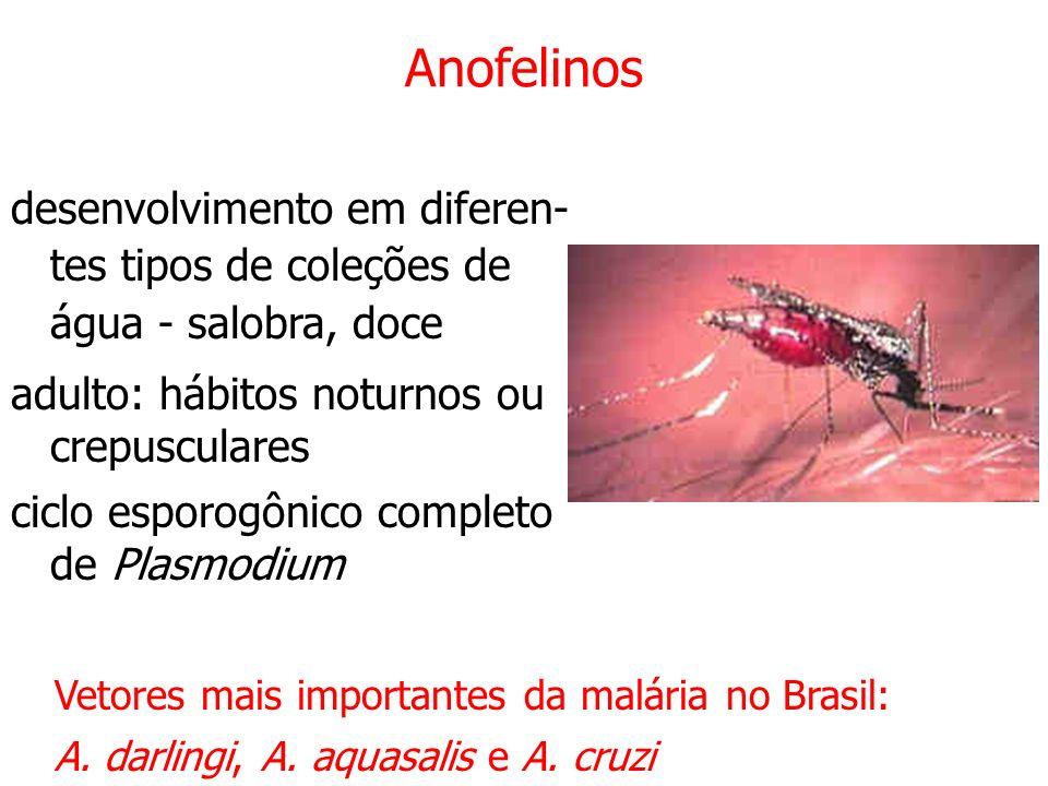 Anofelinos desenvolvimento em diferen- tes tipos de coleções de água - salobra, doce adulto: hábitos noturnos ou crepusculares ciclo esporogônico completo de Plasmodium Vetores mais importantes da malária no Brasil: A.