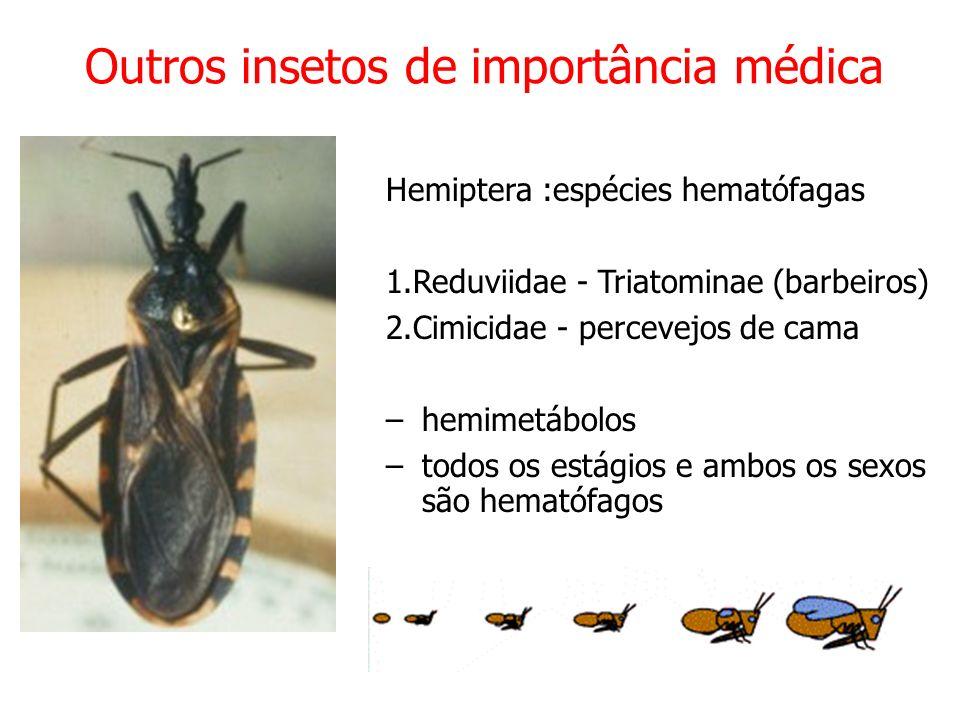 Hemiptera :espécies hematófagas 1.Reduviidae - Triatominae (barbeiros) 2.Cimicidae - percevejos de cama –hemimetábolos –todos os estágios e ambos os sexos são hematófagos Outros insetos de importância médica