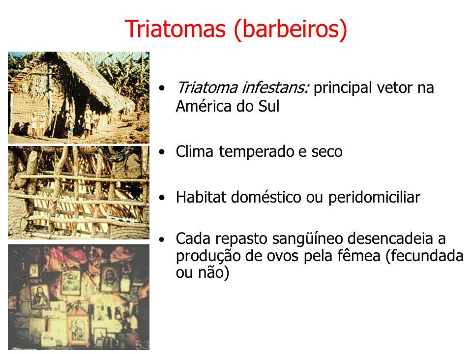 Triatomas (barbeiros) Triatoma infestans: principal vetor na América do Sul Clima temperado e seco Habitat doméstico ou peridomiciliar Cada repasto sangüíneo desencadeia a produção de ovos pela fêmea (fecundada ou não)
