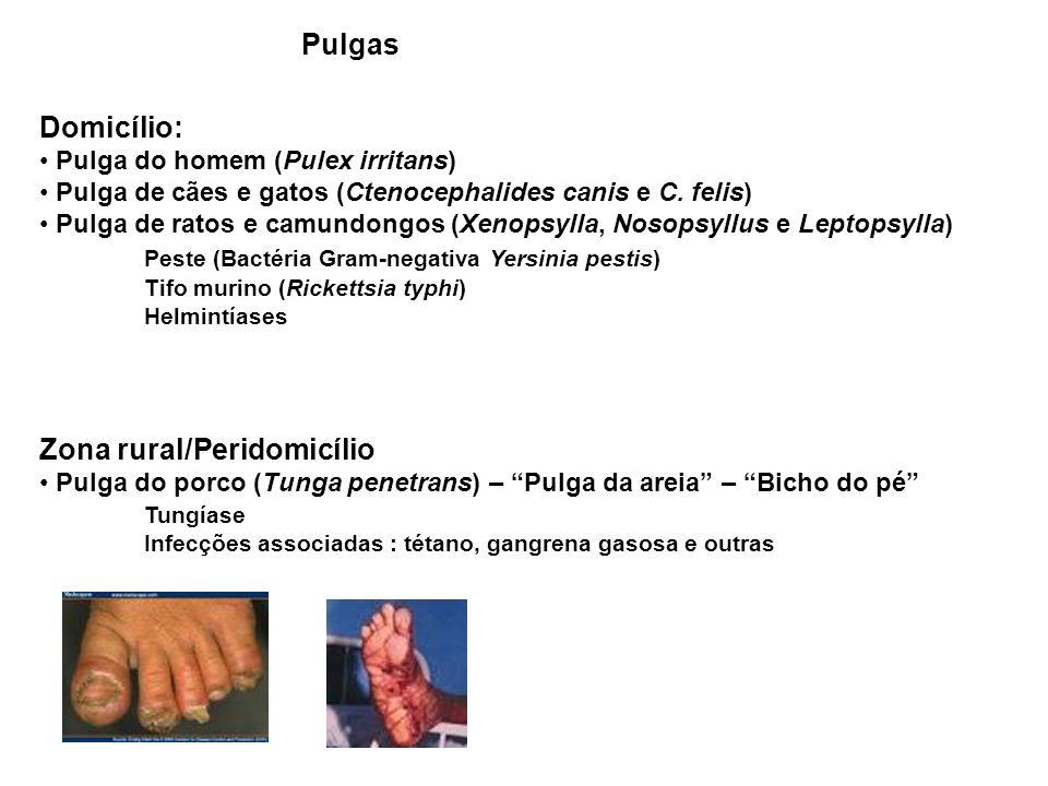 Pulgas Domicílio: Pulga do homem (Pulex irritans) Pulga de cães e gatos (Ctenocephalides canis e C.