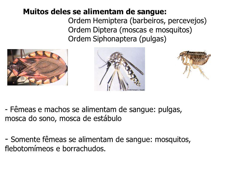 miíases –afecções produzidas pela presença de larvas de moscas em tecidos de animais vertebrados; –larvas biontófagas, capazes de invadir tecidos sadios (Dermatobia hominis = berne; Cochliomya hominivorax = mosca varejeira ou bicheiras).