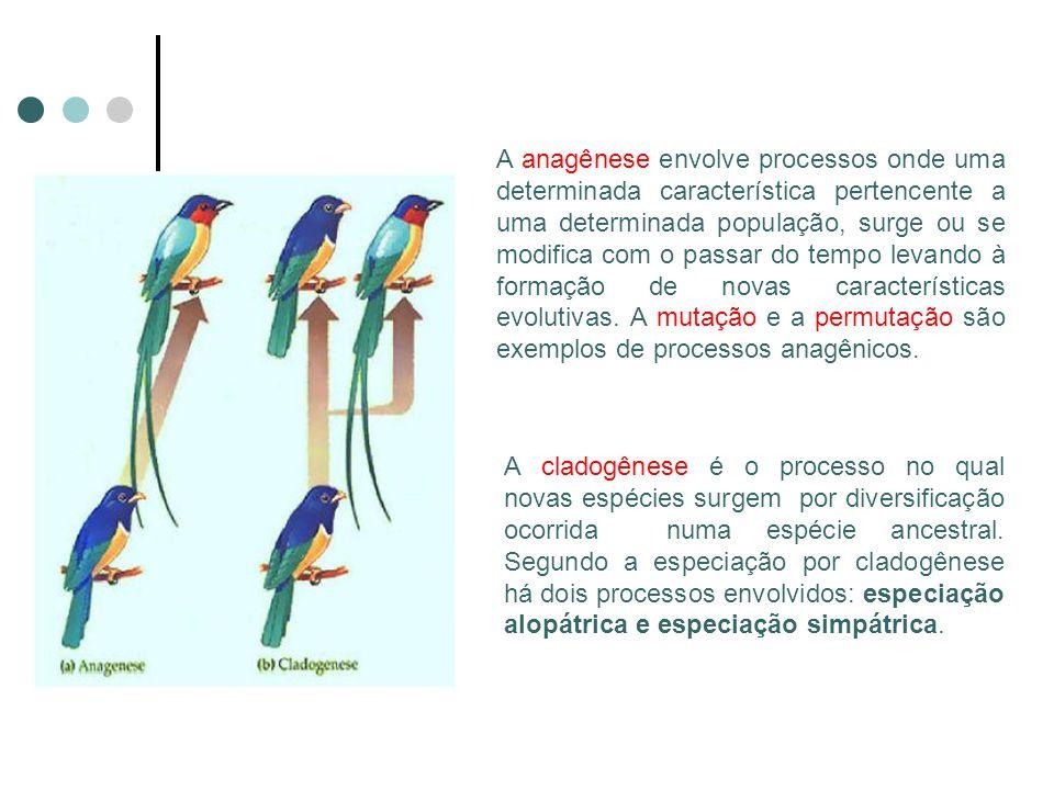 A anagênese envolve processos onde uma determinada característica pertencente a uma determinada população, surge ou se modifica com o passar do tempo levando à formação de novas características evolutivas.