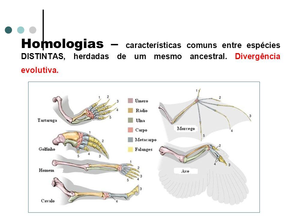 Homologias – características comuns entre espécies DISTINTAS, herdadas de um mesmo ancestral.