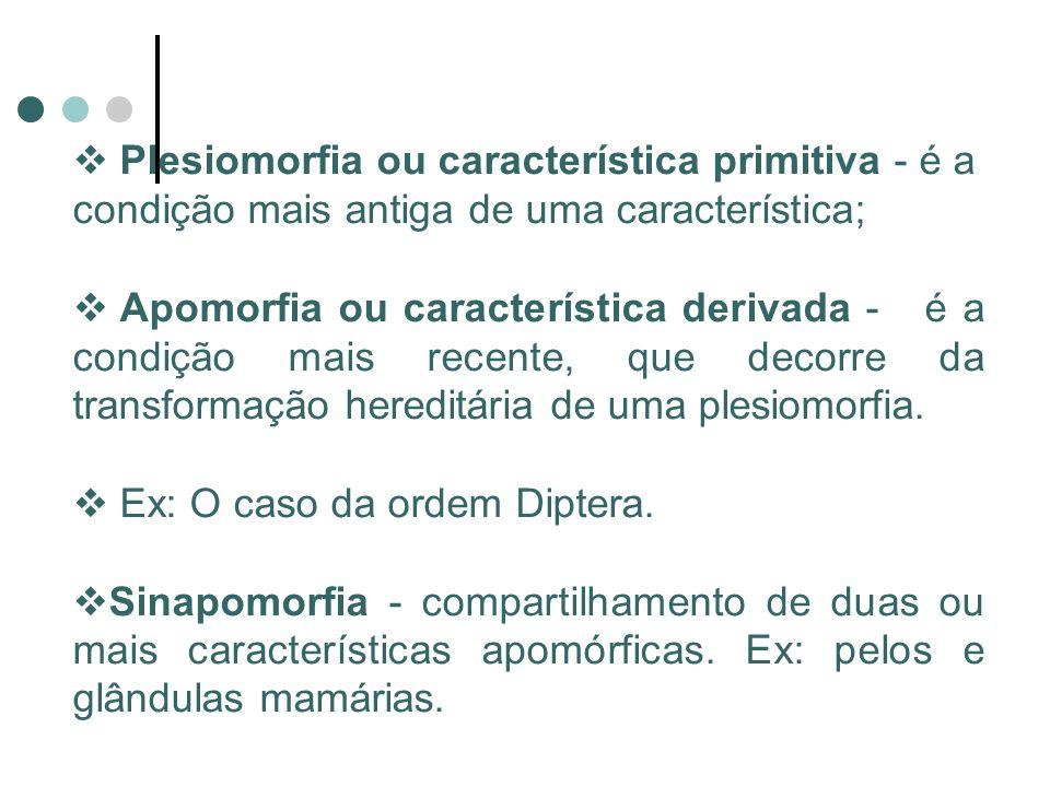 Plesiomorfia ou característica primitiva - é a condição mais antiga de uma característica; Apomorfia ou característica derivada - é a condição mais recente, que decorre da transformação hereditária de uma plesiomorfia.