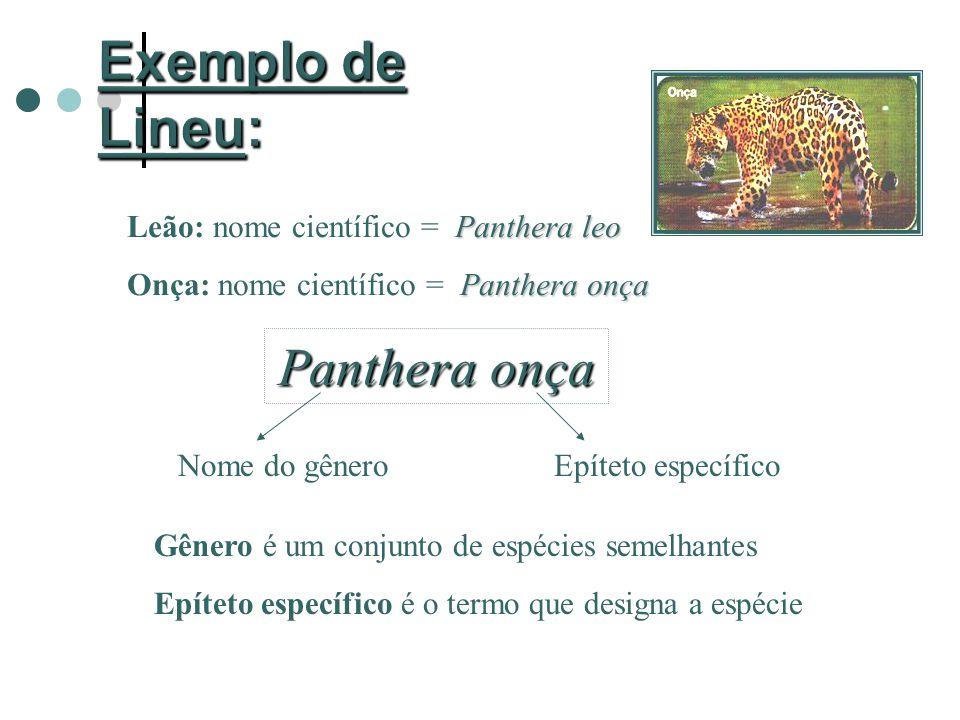Panthera leo Leão: nome científico = Panthera leo Panthera onça Onça: nome científico = Panthera onça Panthera onça Nome do gêneroEpíteto específico Gênero é um conjunto de espécies semelhantes Epíteto específico é o termo que designa a espécie