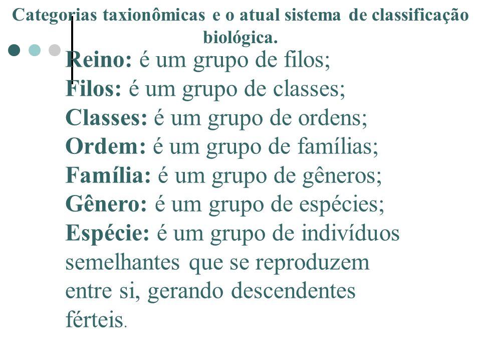 1.DOMINIO (Archea, Bacteria, EuKarya, ) 2.REINO 3.FILO OU DIVISÃO 4.CLASSE 5.ORDEM 6.FAMILIA 7.GENERO 8.ESPÉCIE Unidade natural de classificação.