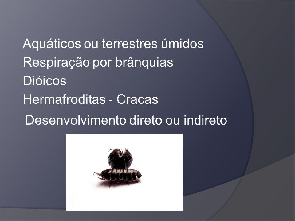 Aquáticos ou terrestres úmidos Respiração por brânquias Dióicos Hermafroditas - Cracas Desenvolvimento direto ou indireto