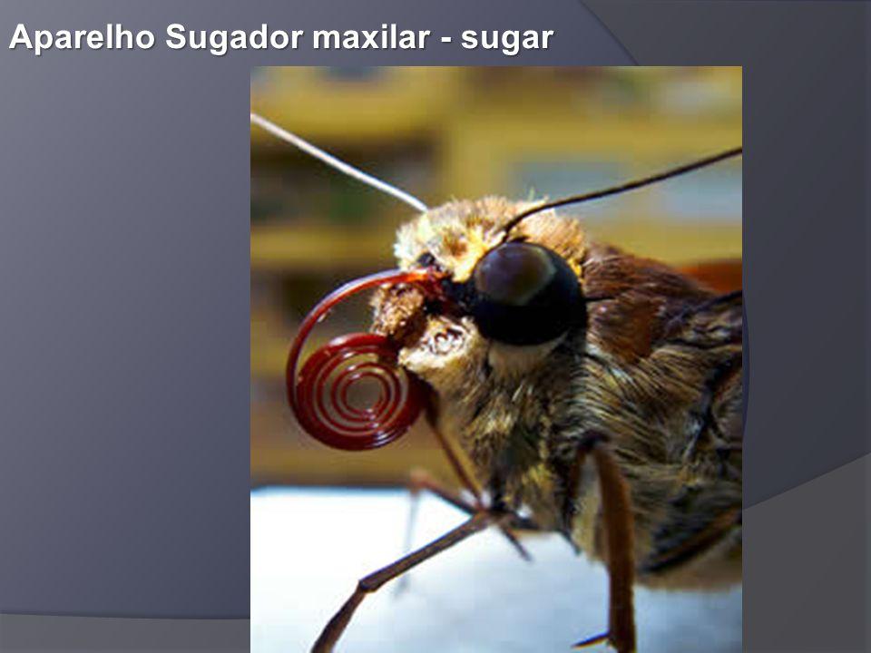 Aparelho Sugador maxilar - sugar