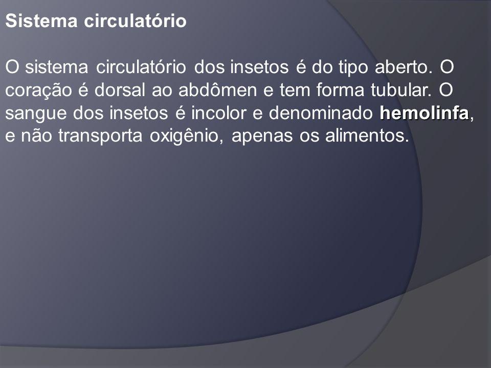 hemolinfa Sistema circulatório O sistema circulatório dos insetos é do tipo aberto. O coração é dorsal ao abdômen e tem forma tubular. O sangue dos in