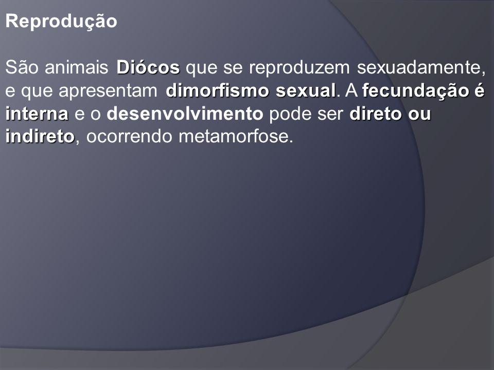 Diócos dimorfismo sexualfecundação é internadireto ou indireto Reprodução São animais Diócos que se reproduzem sexuadamente, e que apresentam dimorfis