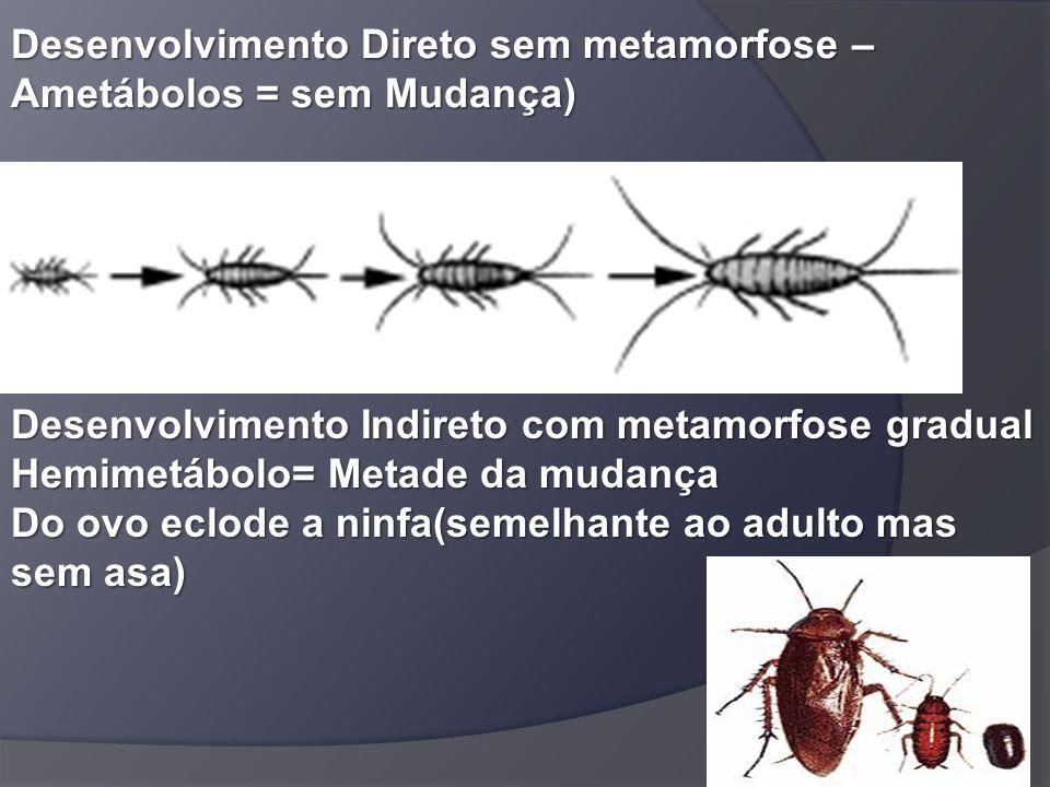 Desenvolvimento Direto sem metamorfose – Ametábolos = sem Mudança) Desenvolvimento Indireto com metamorfose gradual Hemimetábolo= Metade da mudança Do