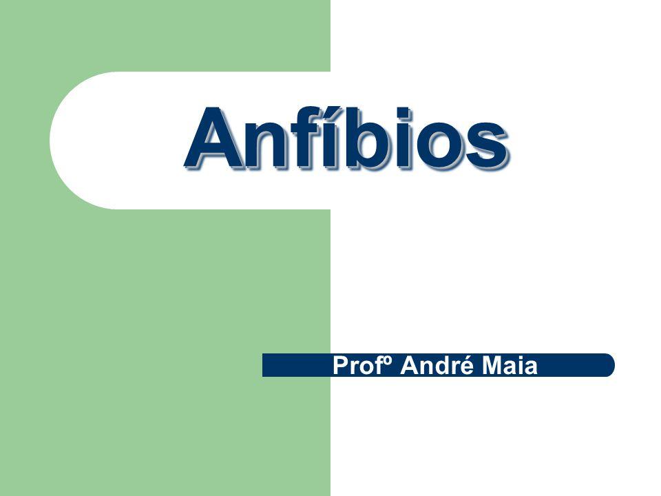 AnfíbiosAnfíbios Profº André Maia