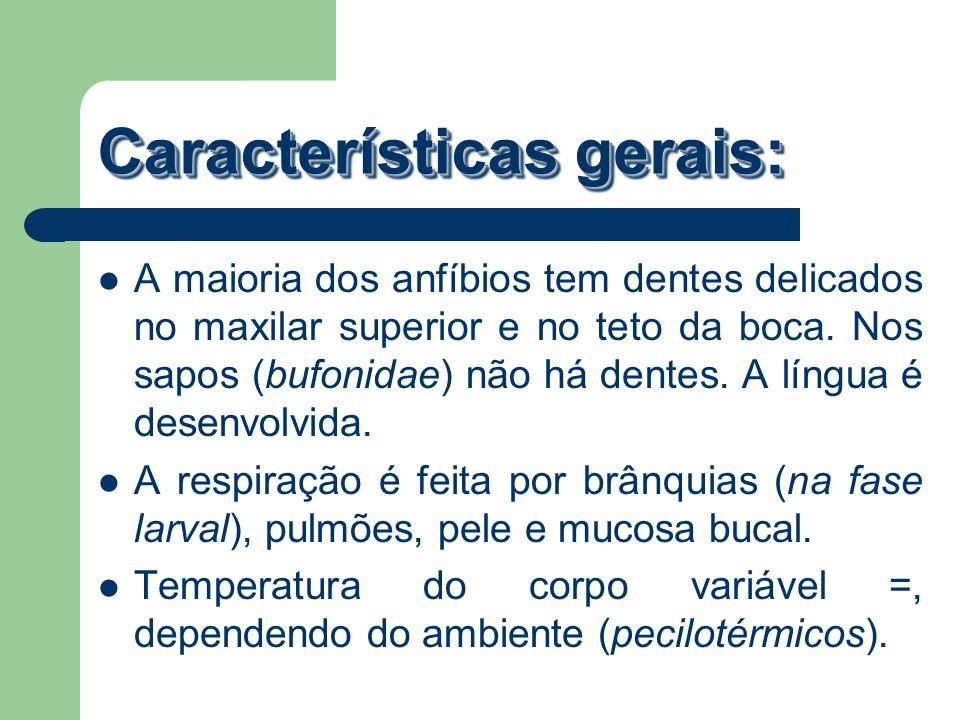 Características gerais: A maioria dos anfíbios tem dentes delicados no maxilar superior e no teto da boca. Nos sapos (bufonidae) não há dentes. A líng