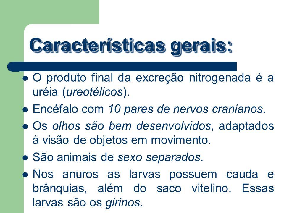 Características gerais: O produto final da excreção nitrogenada é a uréia (ureotélicos). Encéfalo com 10 pares de nervos cranianos. Os olhos são bem d