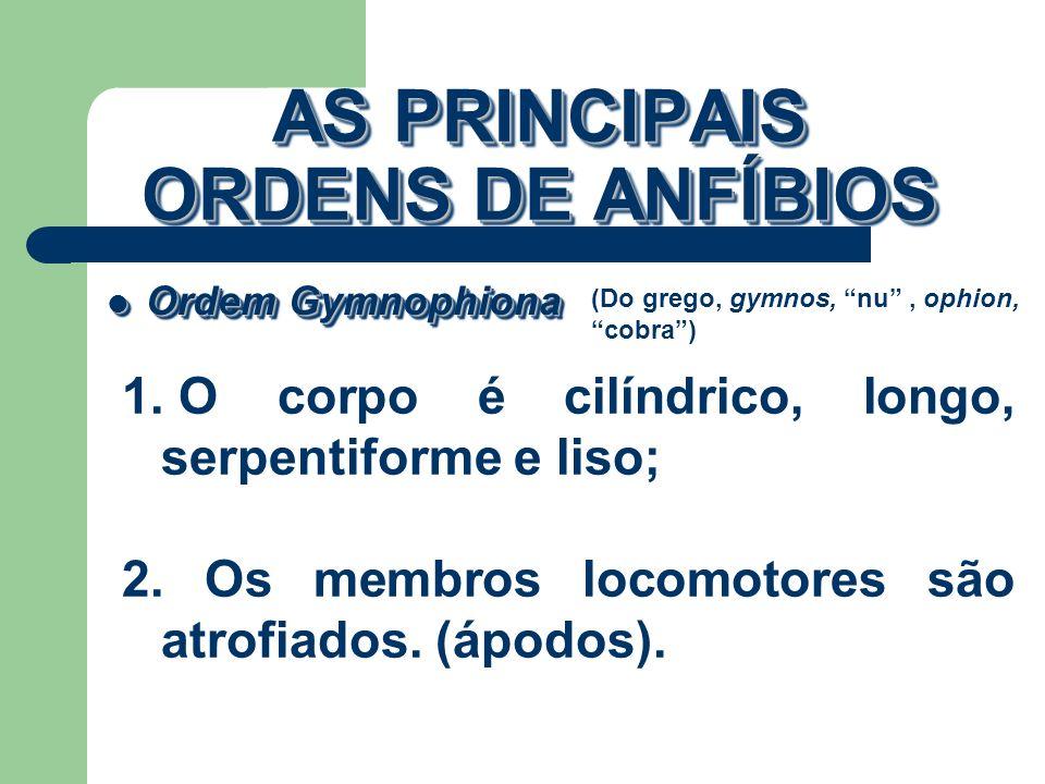 AS PRINCIPAIS ORDENS DE ANFÍBIOS Ordem Gymnophiona Ordem Gymnophiona (Do grego, gymnos, nu, ophion, cobra) 1. O corpo é cilíndrico, longo, serpentifor