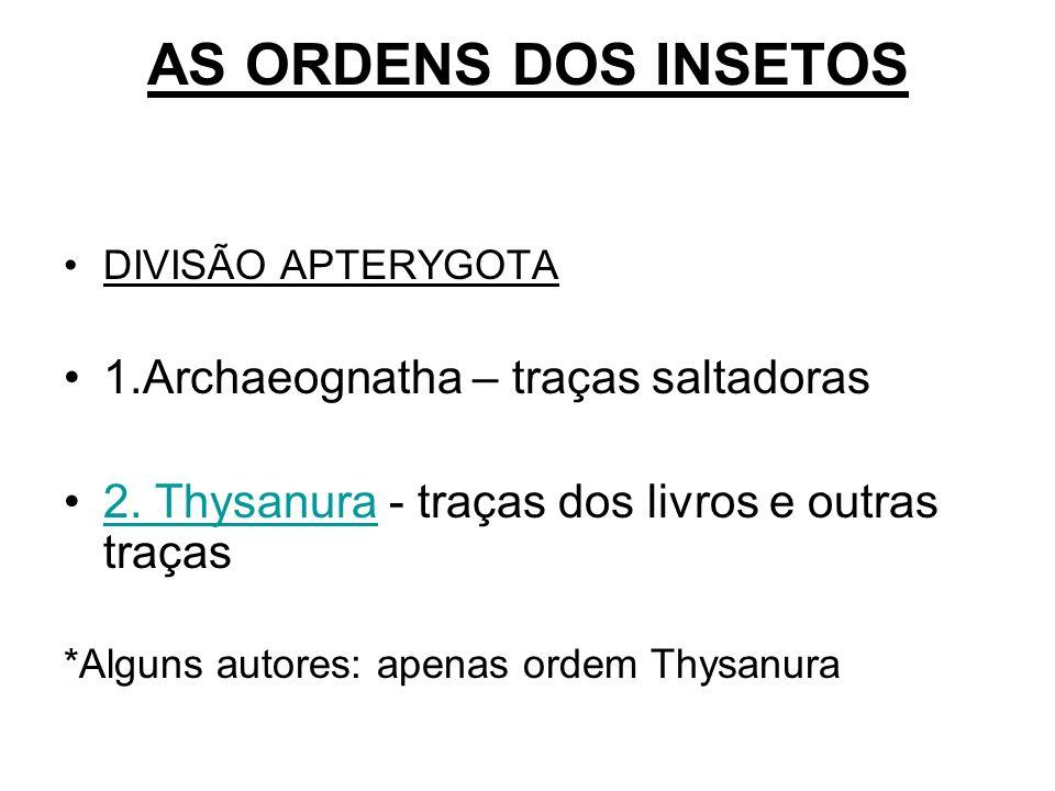 AS ORDENS DOS INSETOS DIVISÃO APTERYGOTA 1.Archaeognatha – traças saltadoras 2. Thysanura - traças dos livros e outras traças2. Thysanura *Alguns auto