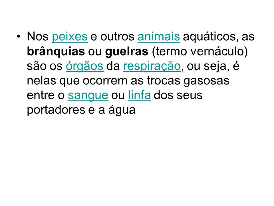Nos peixes e outros animais aquáticos, as brânquias ou guelras (termo vernáculo) são os órgãos da respiração, ou seja, é nelas que ocorrem as trocas g