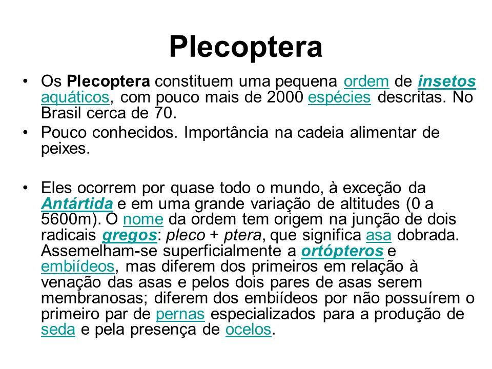 Plecoptera Os Plecoptera constituem uma pequena ordem de insetos aquáticos, com pouco mais de 2000 espécies descritas. No Brasil cerca de 70.ordeminse