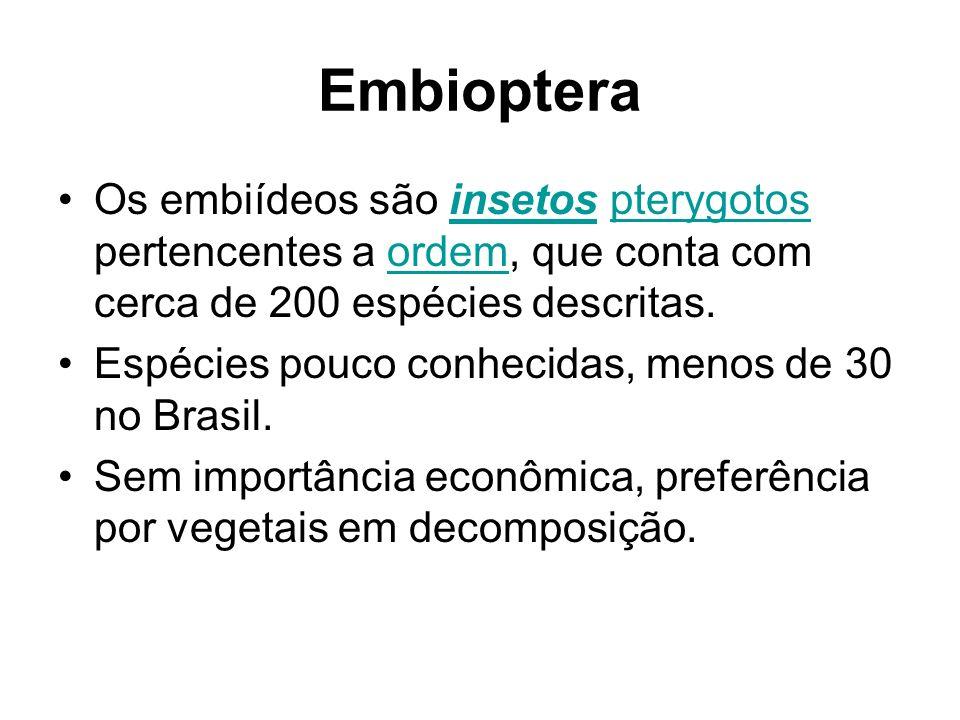 Embioptera Os embiídeos são insetos pterygotos pertencentes a ordem, que conta com cerca de 200 espécies descritas.insetospterygotosordem Espécies pou