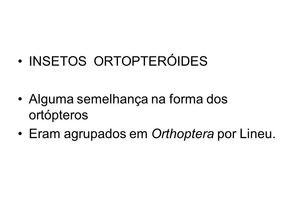 INSETOS ORTOPTERÓIDES Alguma semelhança na forma dos ortópteros Eram agrupados em Orthoptera por Lineu.