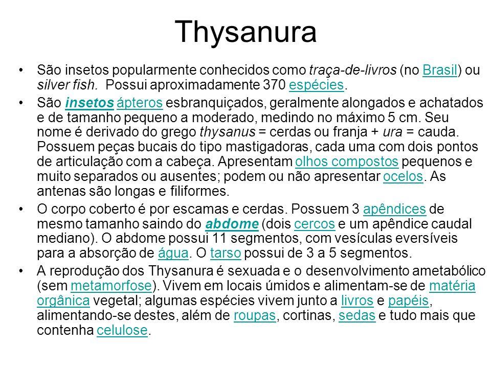 Thysanura São insetos popularmente conhecidos como traça-de-livros (no Brasil) ou silver fish. Possui aproximadamente 370 espécies.Brasilespécies São