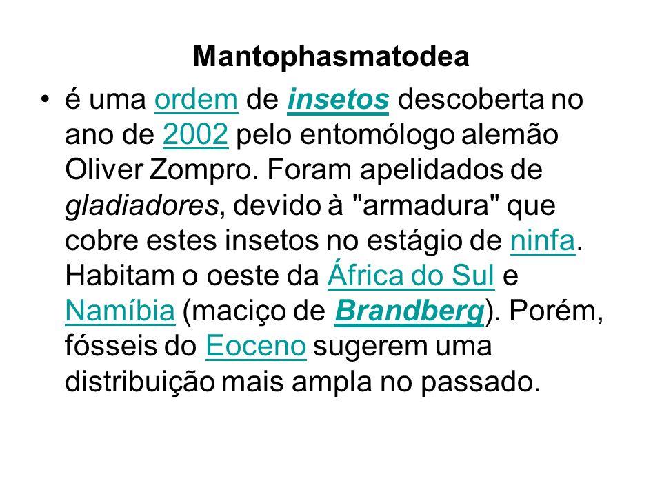 Mantophasmatodea é uma ordem de insetos descoberta no ano de 2002 pelo entomólogo alemão Oliver Zompro. Foram apelidados de gladiadores, devido à