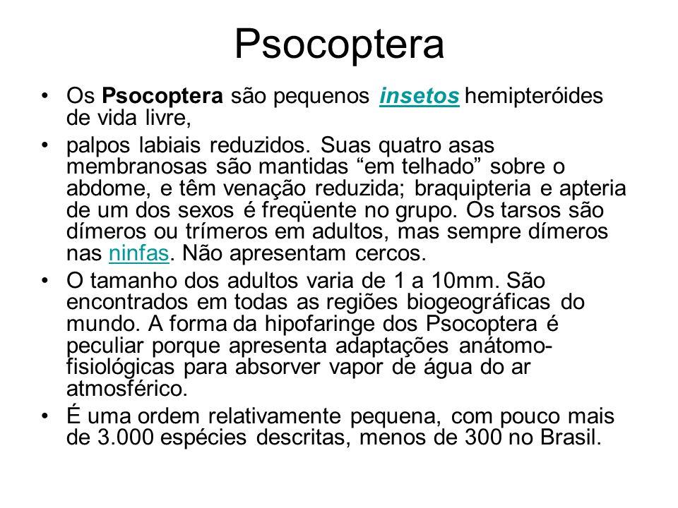 Psocoptera Os Psocoptera são pequenos insetos hemipteróides de vida livre,insetos palpos labiais reduzidos. Suas quatro asas membranosas são mantidas