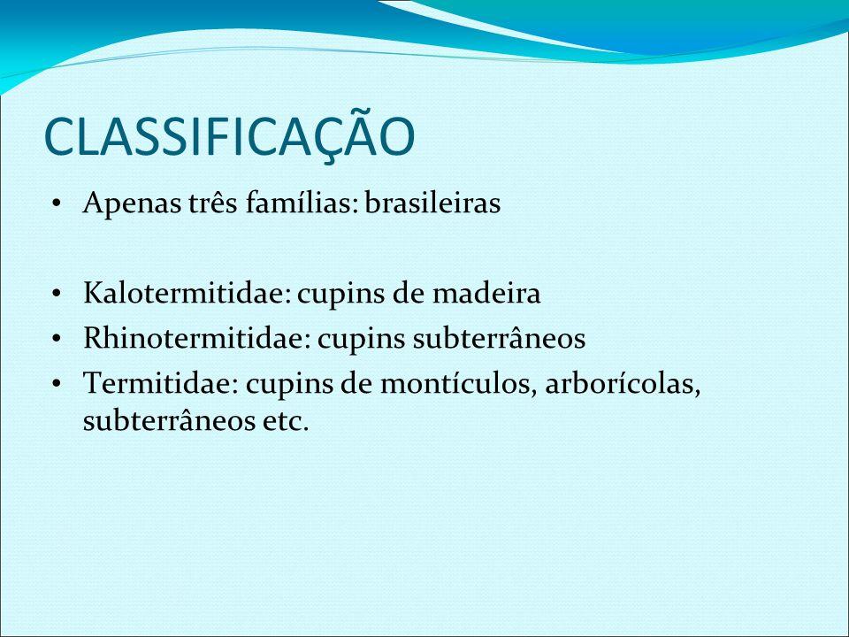 CLASSIFICAÇÃO Apenas três famílias: brasileiras Kalotermitidae: cupins de madeira Rhinotermitidae: cupins subterrâneos Termitidae: cupins de montículo