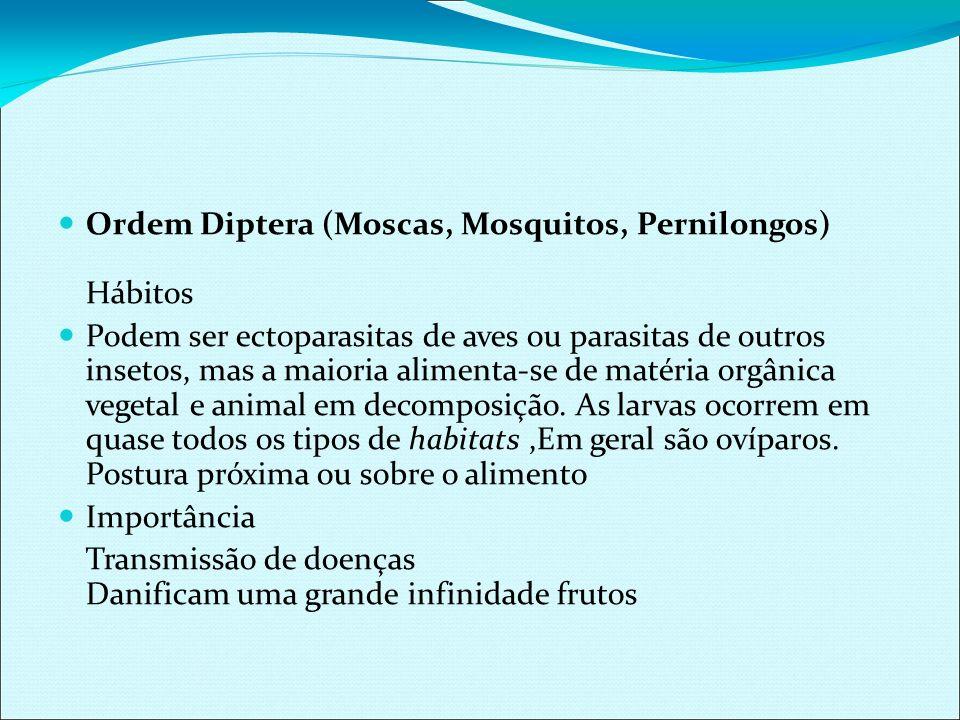 Ordem Diptera (Moscas, Mosquitos, Pernilongos) Hábitos Podem ser ectoparasitas de aves ou parasitas de outros insetos, mas a maioria alimenta-se de ma