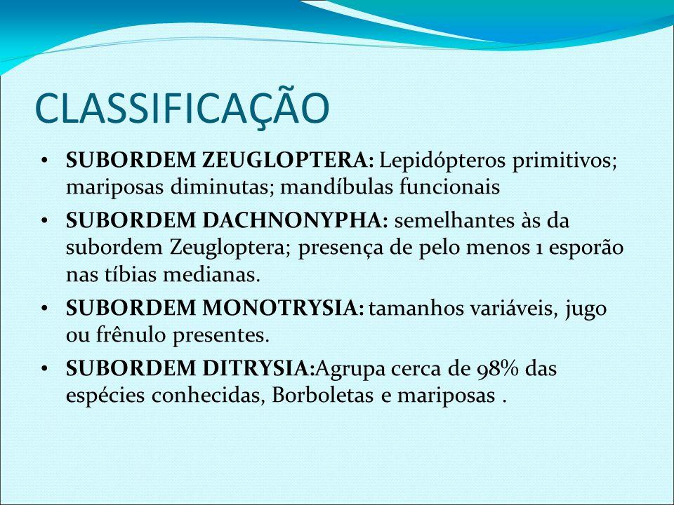 CLASSIFICAÇÃO SUBORDEM ZEUGLOPTERA: Lepidópteros primitivos; mariposas diminutas; mandíbulas funcionais SUBORDEM DACHNONYPHA: semelhantes às da subord