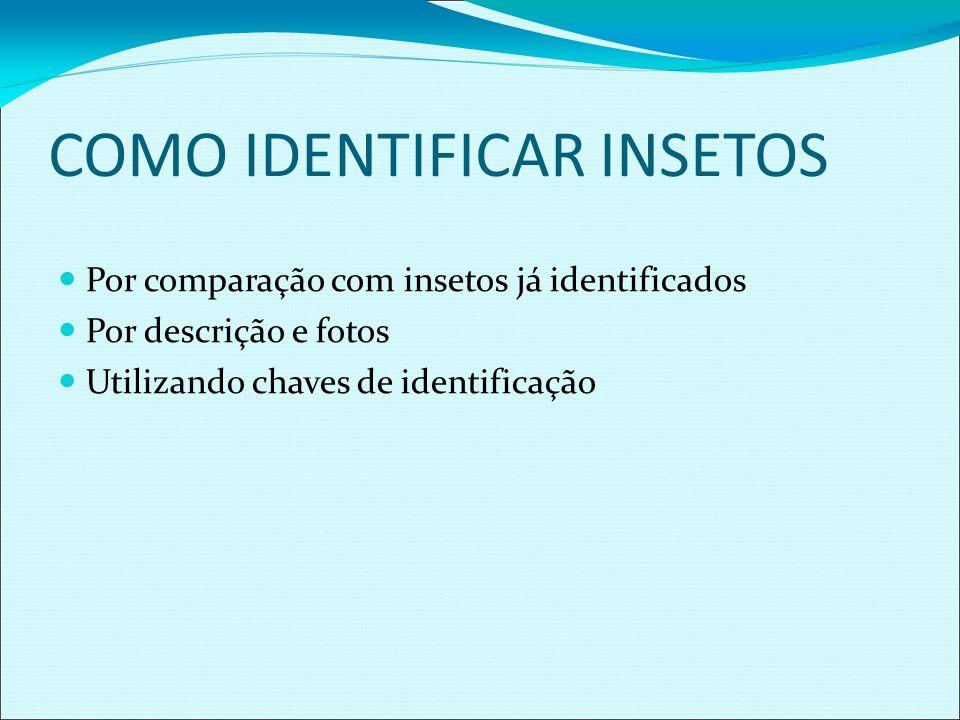 COMO IDENTIFICAR INSETOS Por comparação com insetos já identificados Por descrição e fotos Utilizando chaves de identificação