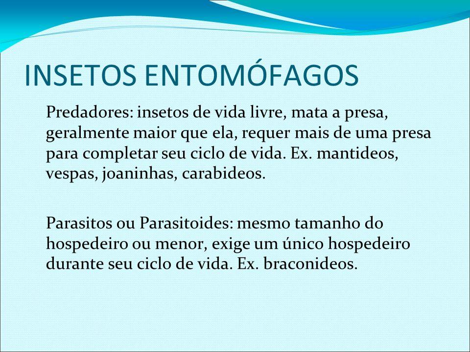 PREDADORES - COLEÓPTEROS COCCINELLIDAE Calosoma sp.