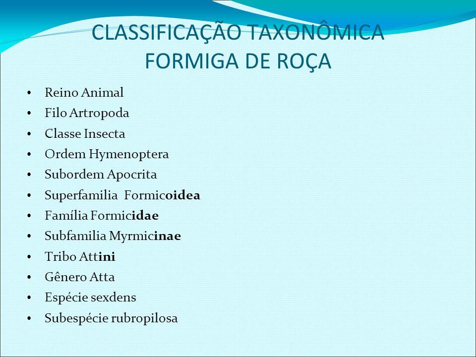 CLASSIFICAÇÃO TAXONÔMICA FORMIGA DE ROÇA Reino Animal Filo Artropoda Classe Insecta Ordem Hymenoptera Subordem Apocrita Superfamilia Formicoidea Famíl