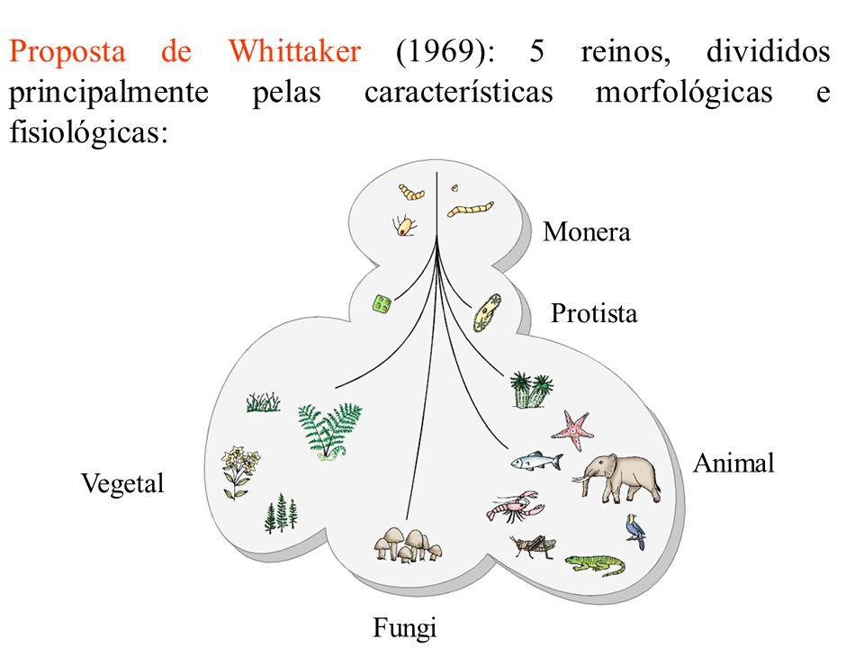 Proposta de Whittaker (1969): 5 reinos, divididos principalmente pelas características morfológicas e fisiológicas: Monera Protista Animal Vegetal Fun