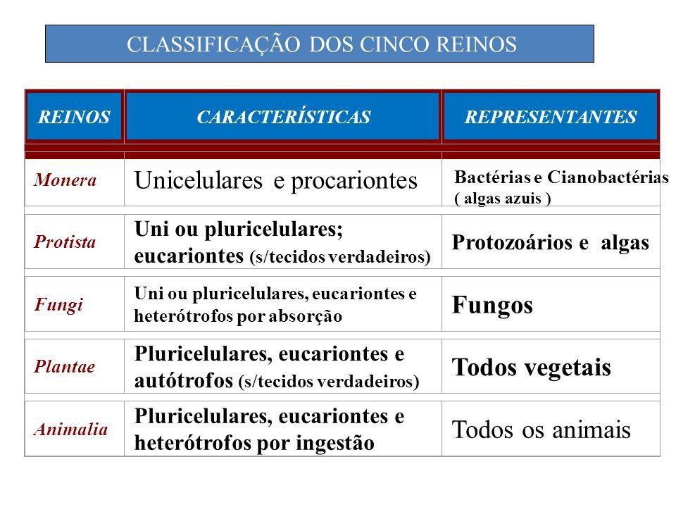 REINOSCARACTERÍSTICASREPRESENTANTES Monera Unicelulares e procariontes Bactérias e Cianobactérias ( algas azuis ) Protista Uni ou pluricelulares; euca