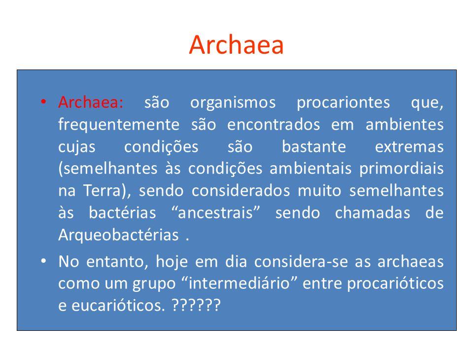 Archaea Archaea: são organismos procariontes que, frequentemente são encontrados em ambientes cujas condições são bastante extremas (semelhantes às co