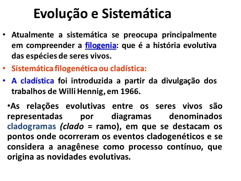 Evolução e Sistemática filogenia Atualmente a sistemática se preocupa principalmente em compreender a filogenia: que é a história evolutiva das espéci
